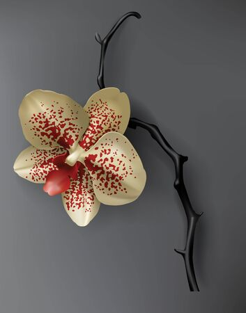 Tropical black, red and gold flower on dark background vector. Beautiful botanical isolated design element, golden tropic jungle plant, exotic spotted or mottled orchid stem. Wedding or spa design