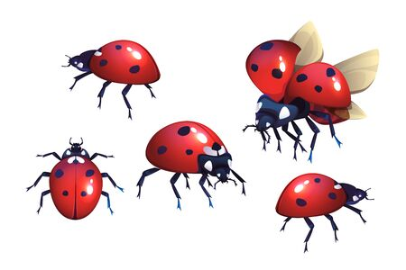 Ladybug or ladybird, red with black spots beetle, winged flying insect set of cartoon realistic vector illustrations isolated on white background, coccinella close-up, top and side view Ilustracja