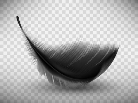 Black fluffy feather with shadow vector realistic illustration, isolated on transparent background. Feather from wing of bird or fallen angel, symbol of softness, design element Ilustración de vector