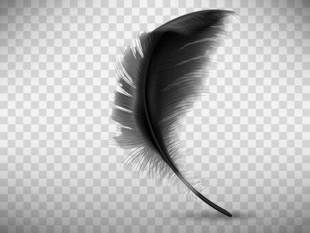 Black fluffy feather with shadow vector realistic illustration, isolated on transparent background. Feather from wing of bird or fallen angel, symbol of softness, design element