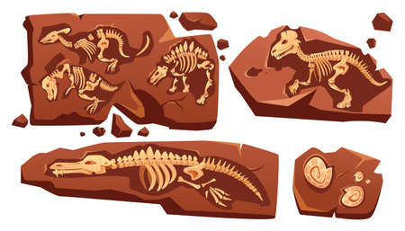 Fossil dinosaurs skeletons, buried snails shells, paleontology finds. Vector cartoon illustration of stone sections with bones of prehistoric reptiles and ammonites isolated on white background
