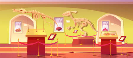 Museum of history with dinosaur skeletons, ancient insects in amber, clay pot and dino fossils. Artifacts at historical exhibition. Paleontology or archaeology science, Cartoon vector illustration