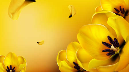Background with yellow tulips, flying petals and copy space for text. Vector template for spring poster or greeting card with realistic flower bouquet. Abstract floral wallpaper with yellow blossoms