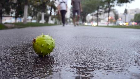 The chestnut lies on the asphalt. Meeting two men, communication copcept. Rainy weather