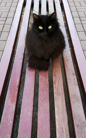 POV black cat with a mysterious look sitting on a bench Stok Fotoğraf