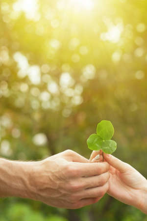 Close up of a hand holding a clover leaf and giving a leaf with natural background. Three-leaf clover in hand background. Male and female hands hold a clover trefoil. Green shamrock. Archivio Fotografico