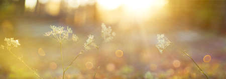 Blurred autumn background.Abstract natural background with bokeh and sun flares. A soft focus of nature with a yellow-orange accent. Delicate background in pastel colors with a soft yellow accent