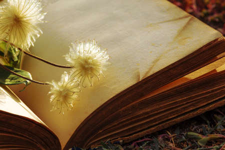 Open book with fluffy flowers.Abstract vintage background.Abstract blurred background of sheets of old book. Copy space for text. Book open pages