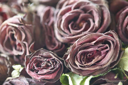 Floral background. Withered roses. Dried roses.