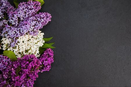 Purple and white lilac arrangement on dark background with copy space. Floral picture with lilac blooming on the left. 스톡 콘텐츠