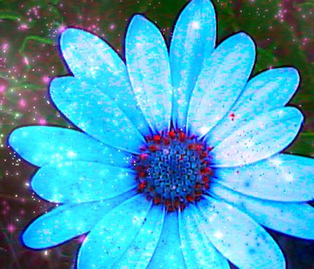Blue Dasie