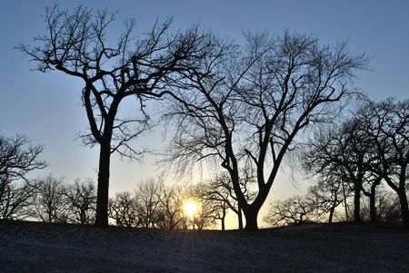 frozen trees: Sunset between two trees in Olin Park Madison WI