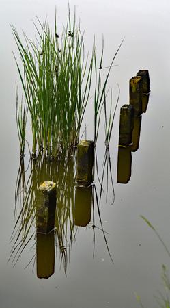 flushing: Flushing Nollebos lake naturally