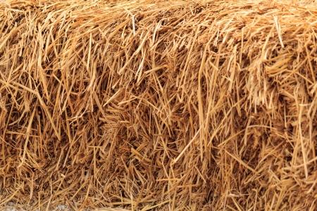 ruminants: Bale golden straw texture, ruminants animal food background
