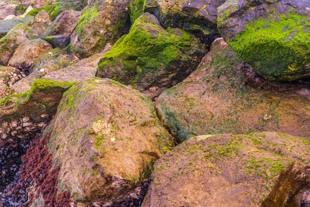 Pebbles bathed by the sea covered with green moss