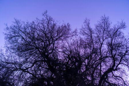 Tree oars on the background of blue sky Foto de archivo