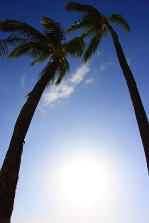 a tropical tree, called coconut palm Banco de Imagens - 98898336