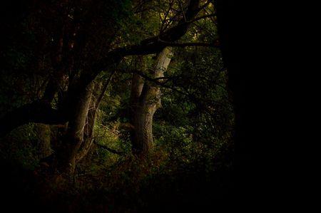 dark woods: Dark woods