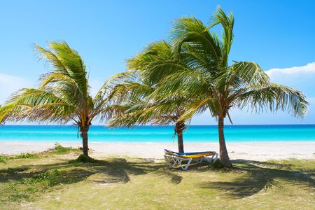 Palm trees in a sandy beach with clear blue water Stock Photo - 5559548