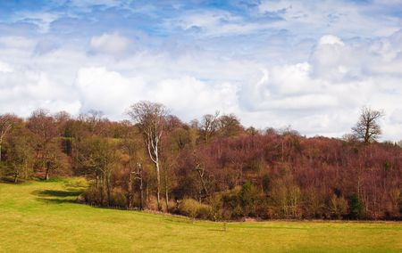Forest and meadows with a beautiful cloudy sky Stock Photo - 6724051