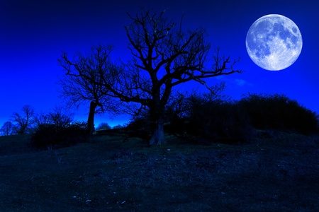 Dead tree at midnight with a glowing full moon photo