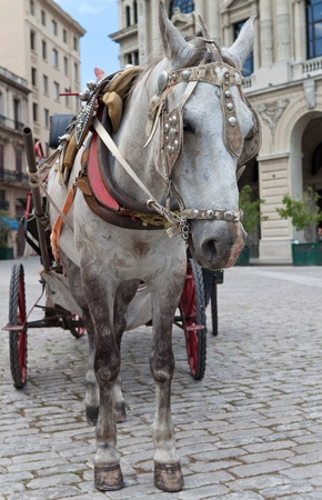 horse traction: Traditional horse carriage in a square in Old Havana