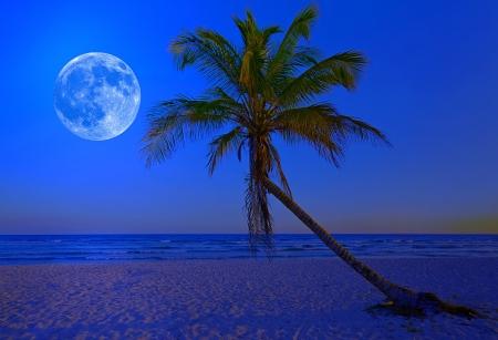 luz de luna: La luna brilla en una playa tropical desierta a media noche con una palmera en primer plano