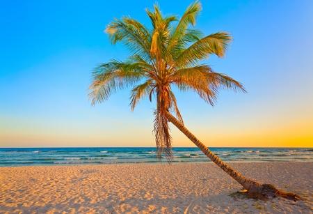 捨てられた熱帯のビーチの夕日にココナッツの木 写真素材