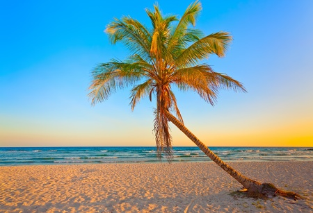 A coconut tree on a deserted tropical beach at sunset photo