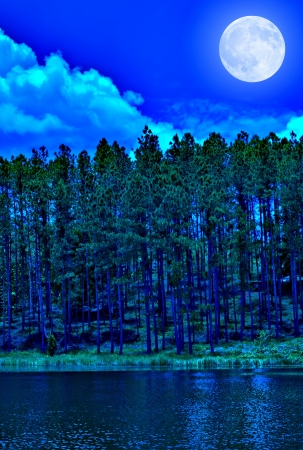 Pine forest at night with a glowing full moon photo
