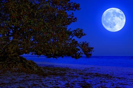 full moon romantic night: Old tree at the sea shore illuminated by a full moon at midnight Stock Photo