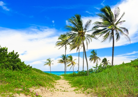 Coconut trees at a tropical beach in Cuba photo