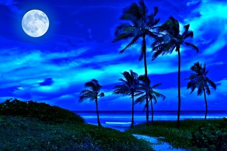 luz de luna: Romántica en la playa tropical en la noche con una luna llena brillante