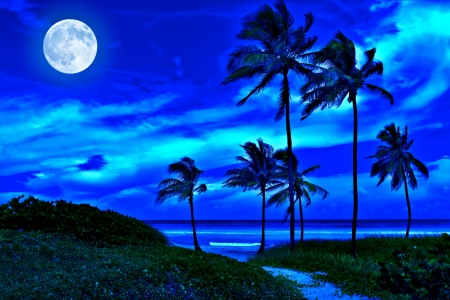 Romantic tropical beach at night with a bright full moon photo