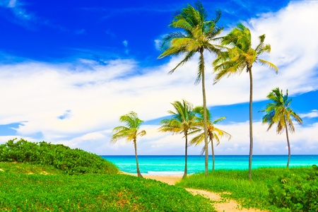 The famous Varadero beach in Cuba Stock Photo - 11116361