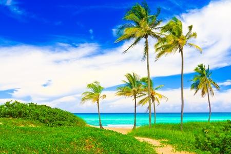The famous Varadero beach in Cuba photo
