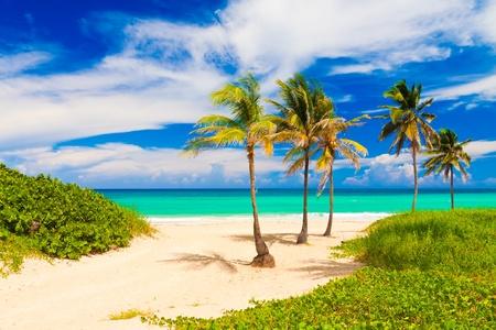 varadero: Beautiful tropical beach in Cuba Stock Photo