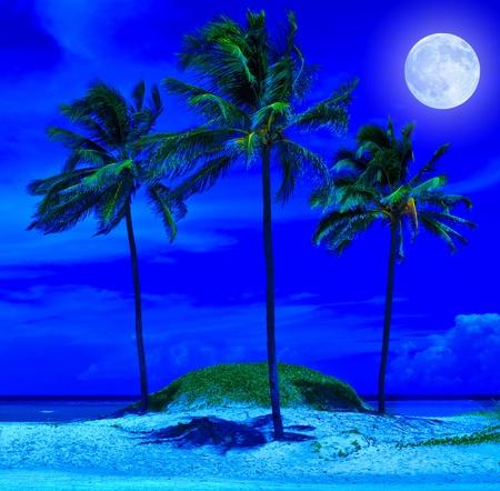 the moonlight: Playa tropical en la noche con una luna llena brillante