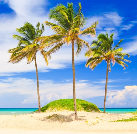 Coconut trees in the beautiful beach of Varadero in Cuba Stock Photo