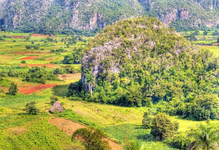 The Vinales valley in Cuba, a famous tourist destination and a major tobacco growing area Stock Photo - 11116340