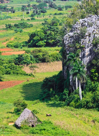 The Vinales valley in Cuba, a famous tourist destination and a major tobacco growing area Stock Photo - 11116329