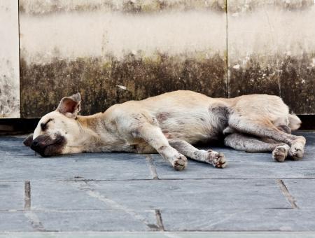 Abandoned homeless stray dog sleeping on the street photo