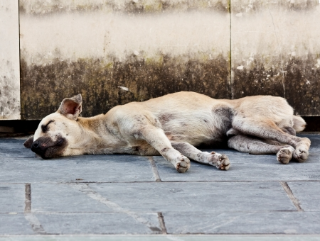 dead animal: Abandoned homeless stray dog sleeping on the street
