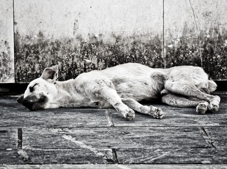 stray: Black and white image of an abandoned homeless stray dog sleeping on the street Stock Photo