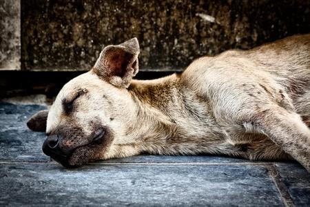 perro triste: Perro viejo triste, abandonado en la calle