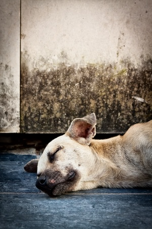 Vertical image of an old sad dog abandoned on the streets with space for text photo