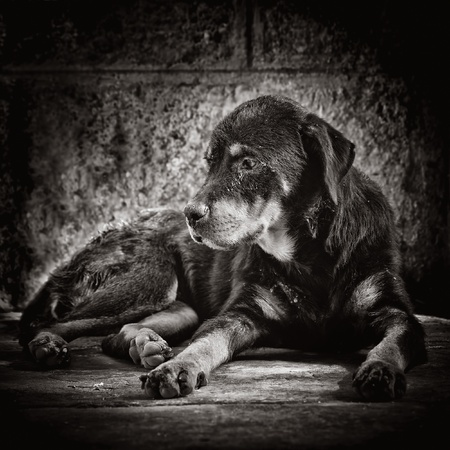 Dark image of a sad dog abandoned on the street Stock Photo - 11874714