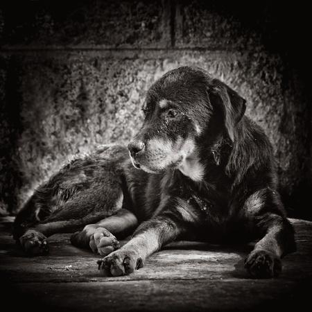 perro triste: Imagen oscura de un perro triste, abandonado en la calle
