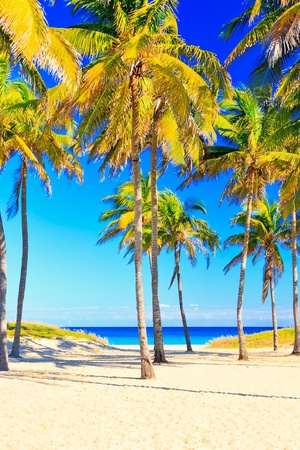 The beautiful beach of Varadero in Cuba Stock Photo - 11996043