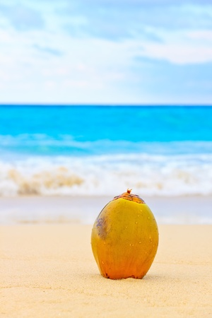 Coconut on the sand of a beautiful beach in Cuba photo